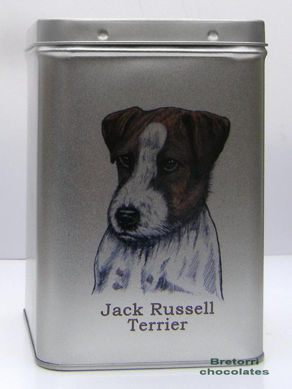 Doza - Jack Russel teriér