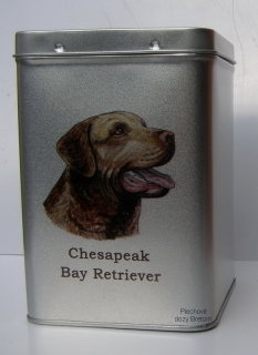 Doza - Chesapeake Bay retriever
